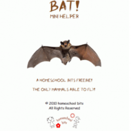 Free Bat Mini Unit Study
