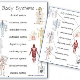 FREE MATCHING PAGES WORKSHEETS FOR HUMAN BODY SYSTEMS
