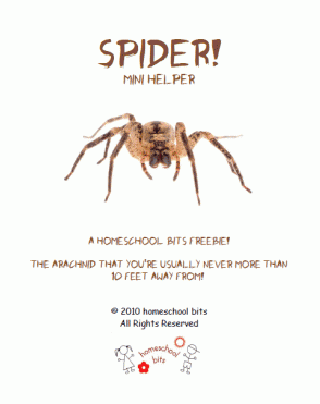 Free Spider Mini Unit Study