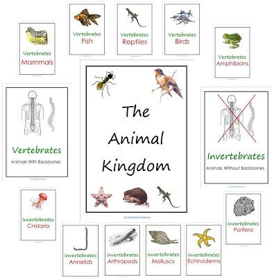 Learnhive | ICSE Grade 9 Biology Diversity in living organisms ...