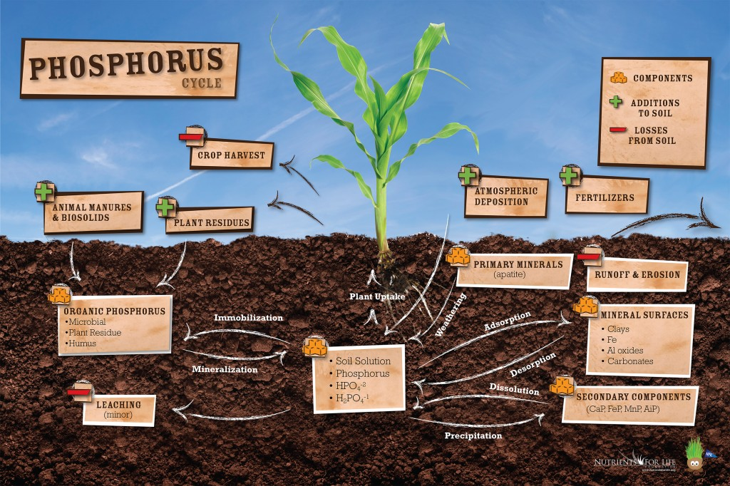 Free science curriculum from the nutrients for life for Soil life cycle