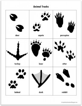 Irresistible image with free printable animal tracks