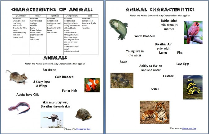 science worksheets animals and their characteristics free homeschool deals. Black Bedroom Furniture Sets. Home Design Ideas
