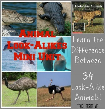 Look-Alike-Animals-mini-unit-984x1024