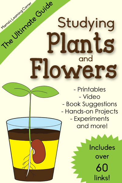 Plants-and-Flowers-Ultimate-Guide