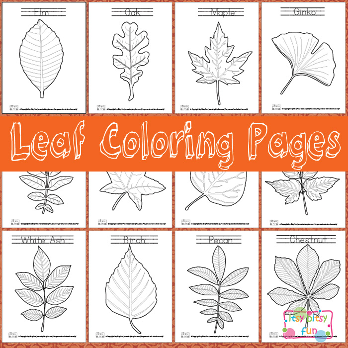 start learning about trees that surround us and learning about leaves is a big part of it itsy bitsy fun shares her free printable leaf coloring pages - Tree Leaves Coloring Page