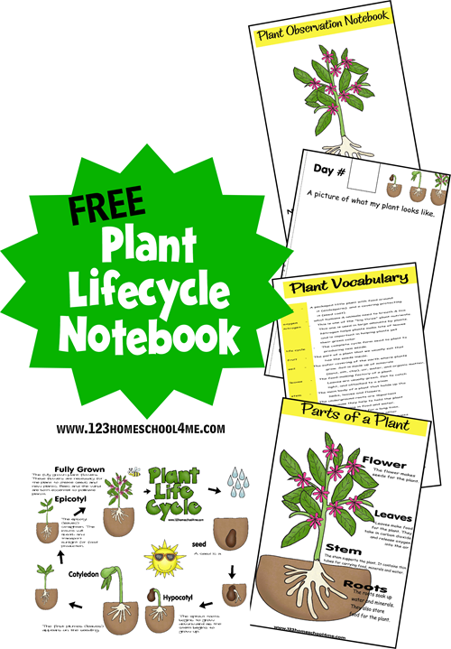 FREE Plant Life Cycle Printables for Spring | Free ...