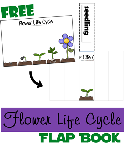 FREE FLOWER LIFE CYCLE FLIP BOOK (instant download) | Free ...