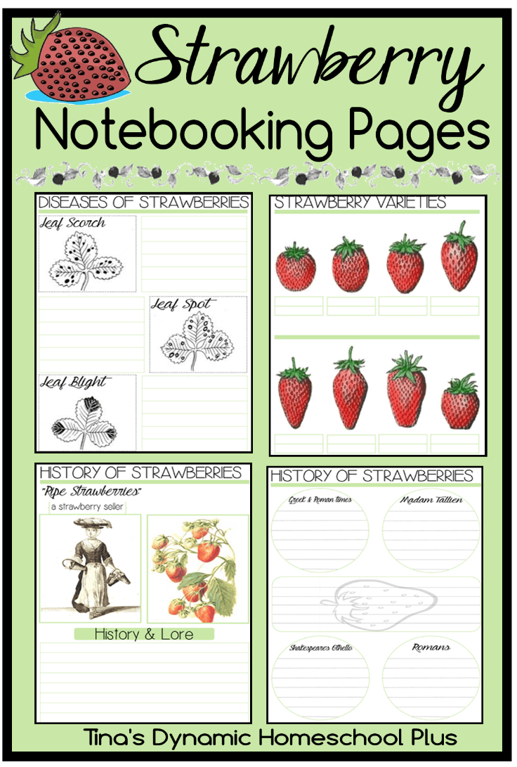 free strawberry notebooking pages free homeschool deals