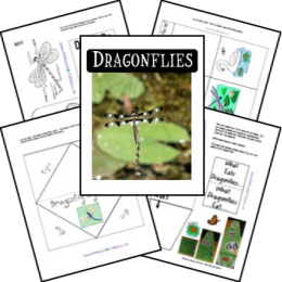 FREE Dragonfly Lapbook