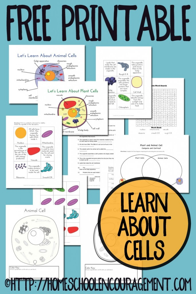 Animal Cell Coloring Page Answers : Free plant and animal cell printables free homeschool deals ©