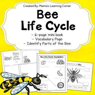 FREE Bee Life Cycle Worksheets