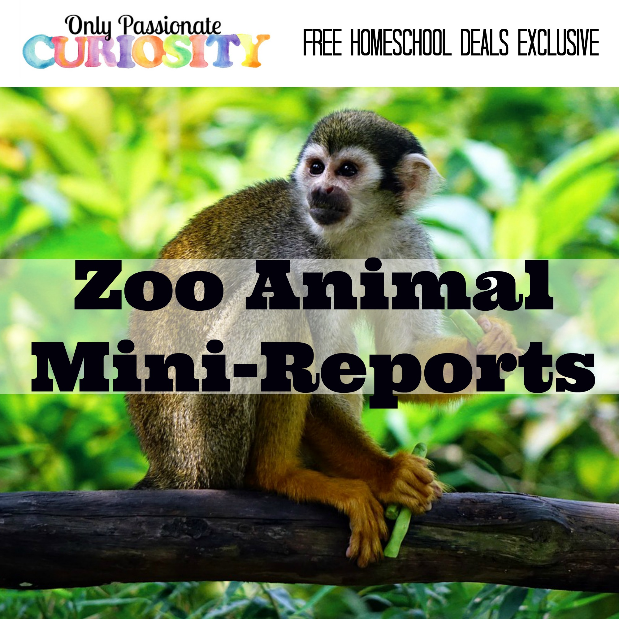 free zoo animal mini reports instant download free homeschool