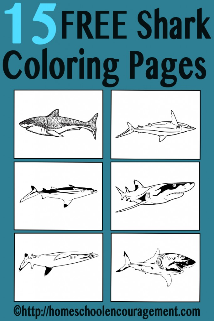 FREE Shark Coloring Pages   Free Homeschool Deals