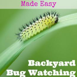 FREE Backyard Bug Nature Study