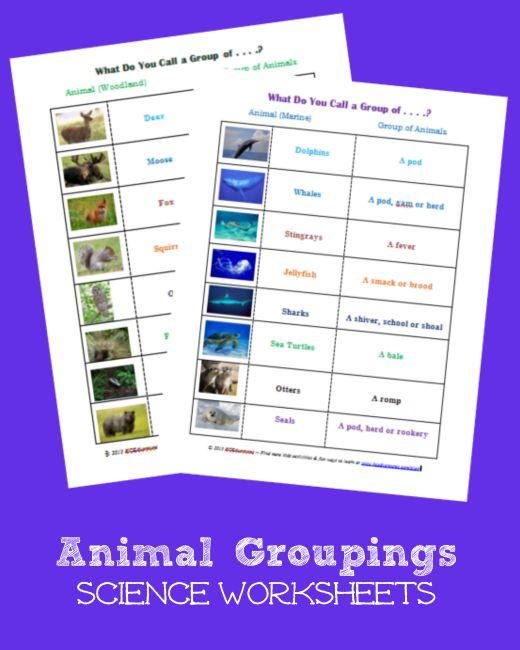 free animal groupings science worksheets free homeschool deals. Black Bedroom Furniture Sets. Home Design Ideas