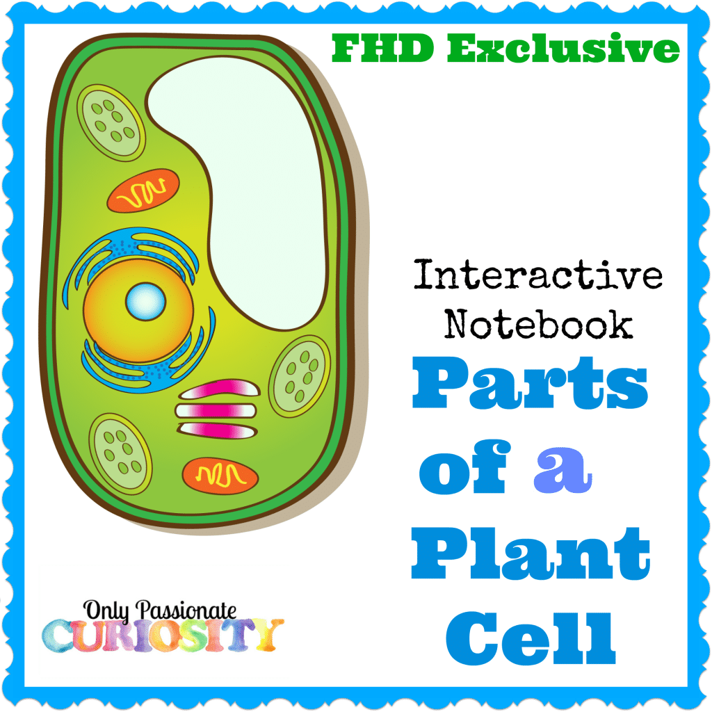 FREE PLANT CELL INTERACTIVE NOTEBOOK (Instant Download ...