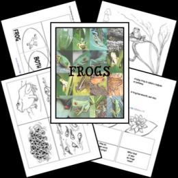 FREE Frog Lapbook