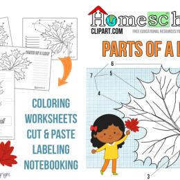 FREE Parts of a Leaf Unit Study