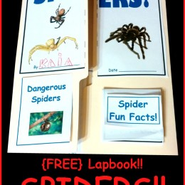 FREE Spider Lapbook