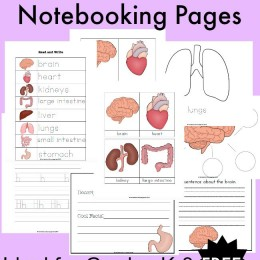 FREE Human Body Notebooking Pages