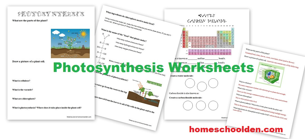 FREE Photosynthesis Worksheets – Photosynthesis Diagram Worksheet