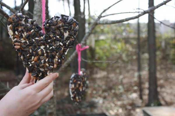 Make a Bird Feeder