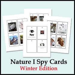 Winter I Spy Cards