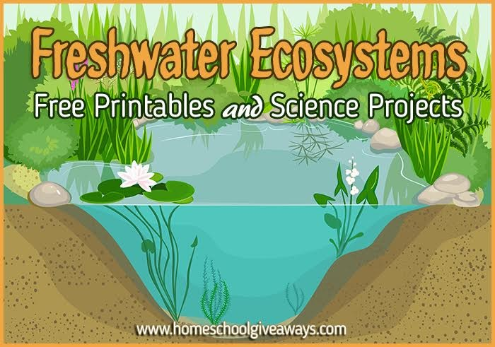 FREE Freshwater Ecosystems Printables and Projects : Free ...
