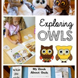FREE Owl Lapbook and Unit Study Pack