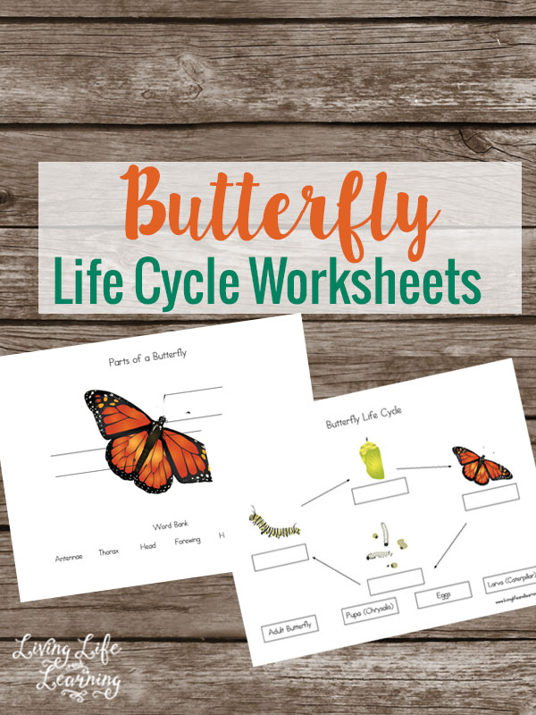 free butterfly life cycle worksheets free homeschool deals. Black Bedroom Furniture Sets. Home Design Ideas