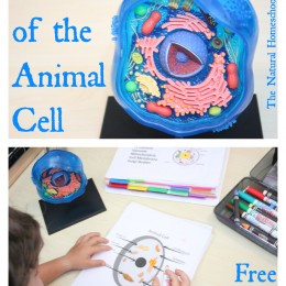 FREE Animal Cell Worksheets and Lesson