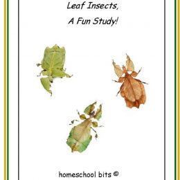 Free Leaf Insect Mini-Unit