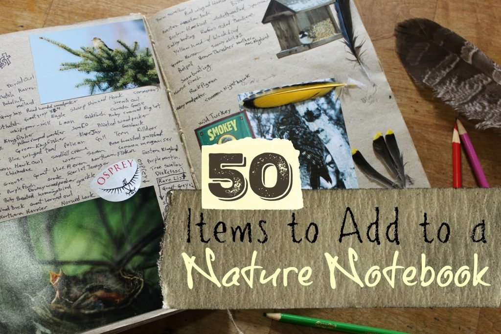 50 Items to Add to a Nature Notebook