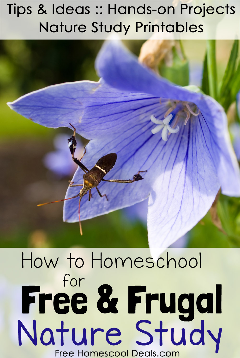 How to Homeschool for Free and Frugal Nature Study  : FHD How to Homeschool Free and Frugal Nature Study from www.freehomeschooldeals.com size 1000 x 1494 jpeg 265kB
