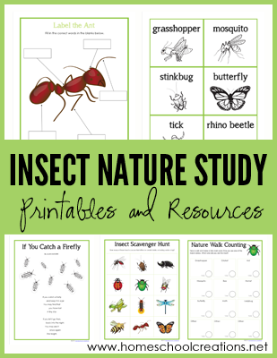 Insect Nature STudy Printables
