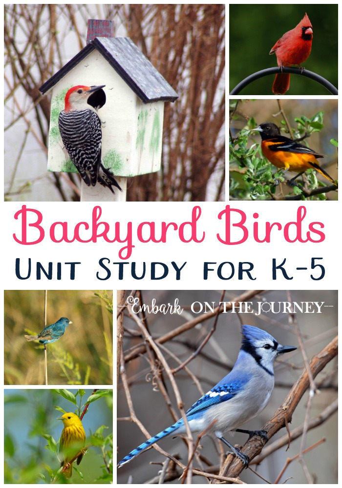 FREE Backyard Birds Unit Study