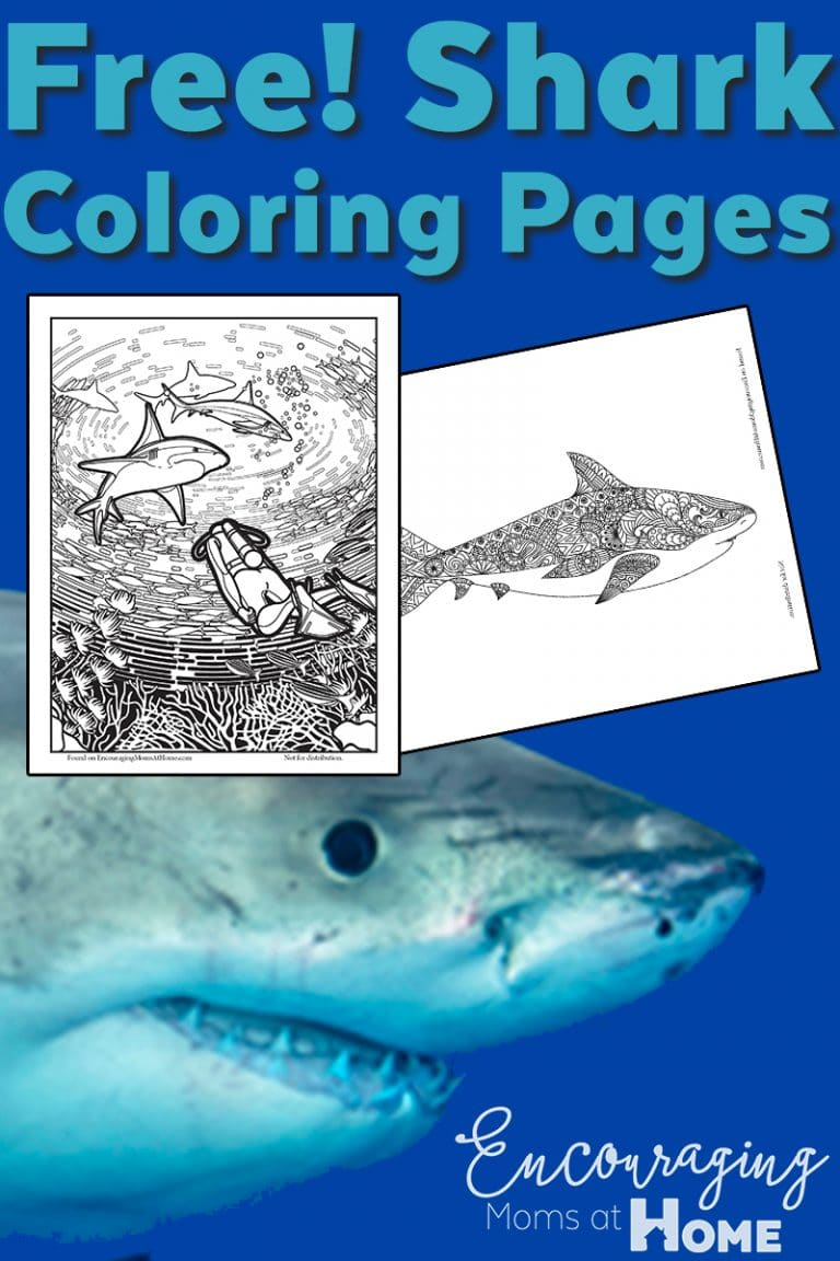 FREE Shark Coloring Pages Free