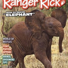 Ranger Rick Magazine Subscription Only $11.99 – Limited Time!