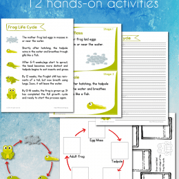 FREE Frog Life Cycle Worksheets