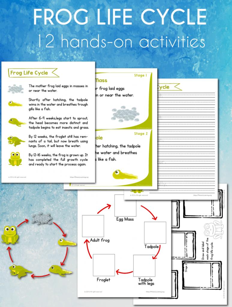 FREE Frog Life Cycle Worksheets – Frog Worksheets