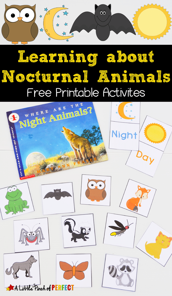 FREE Nocturnal Animals Printables Free Homeschool Deals