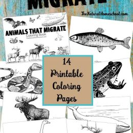 Free Animals That Migrate Coloring Book
