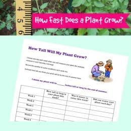 Free Plant Growth STEM Activity
