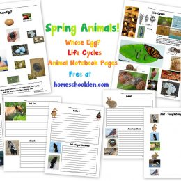 Free Spring Animals Learning Pack