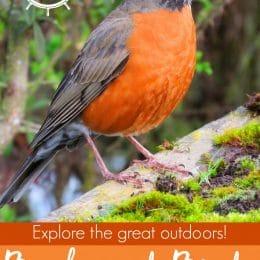 Free Backyard Birds Unit Study Printables