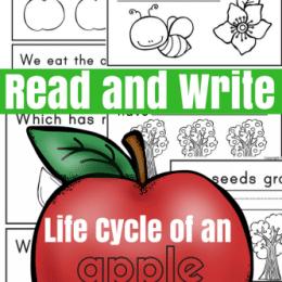 Free Apple Life Cycle Mini-Book
