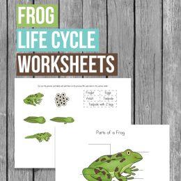 Free Frog Life Cycle Worksheets