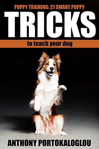 Puppy Training Tricks