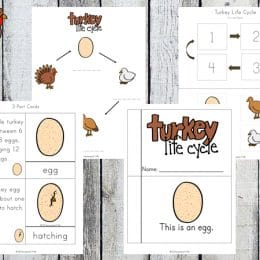 Free Turkey Life Cycle Worksheets